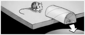 Un pi ge souris fait maison for Attraper souris maison