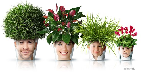 facepot-pot-fleur-photo